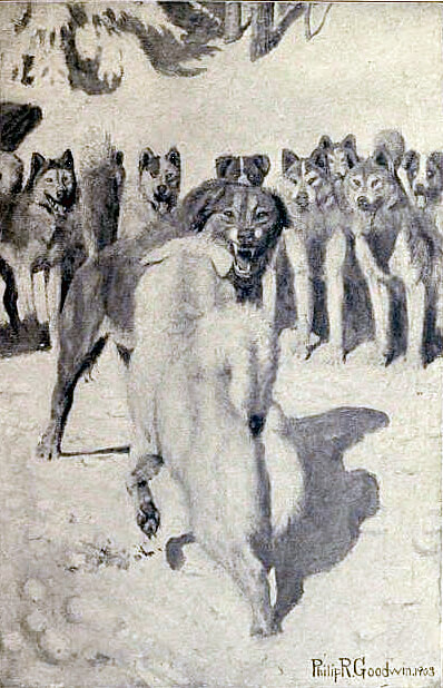 Jack London, The Call of the Wild, Buck becomes the leader of the pack