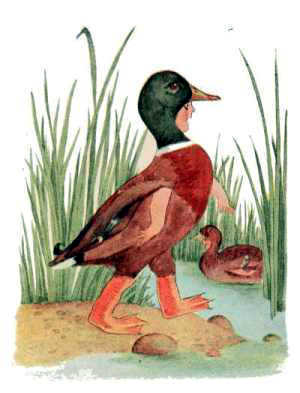 Elizabeth Gordon, Bird Children, mallard duck