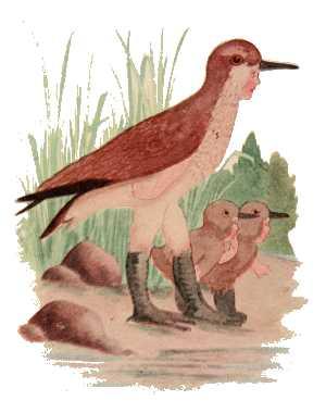Elizabeth Gordon, Bird Children, sandpiper