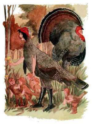 Elizabeth Gordon, Bird Children, turkey