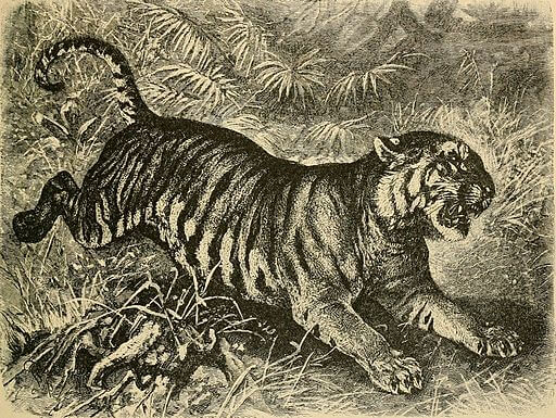 The Lady, or the Tiger? Study Guide: Alfred Edmund Brehm, 1895