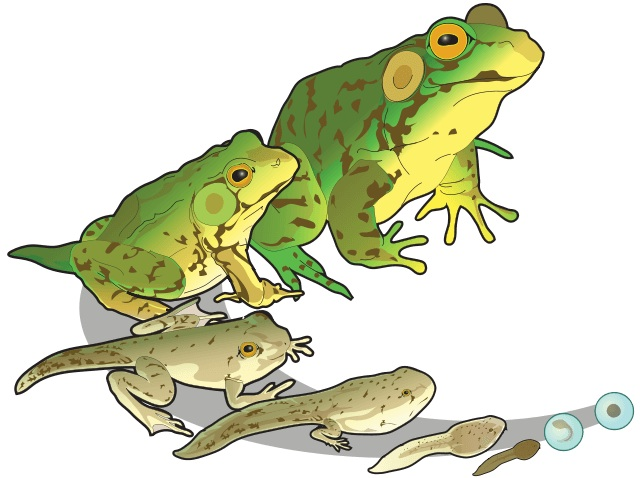 An illustration for the story Five Little Speckled Frogs by the author Anonymous