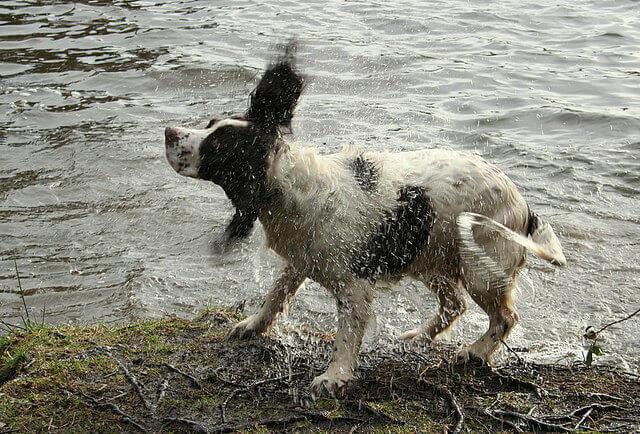 Hinky Pinkie: Soggy- Doggy