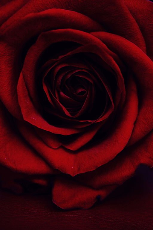 A Rose for Emily: A red, red rose