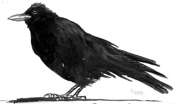 The Brothers Grimm: The Raven, American Crow