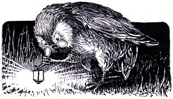 An illustration for the story The Early Owl by the author Oliver Herford