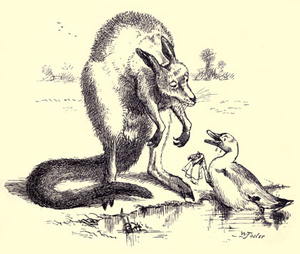 illustration for The Duck and the Kangaroo 1