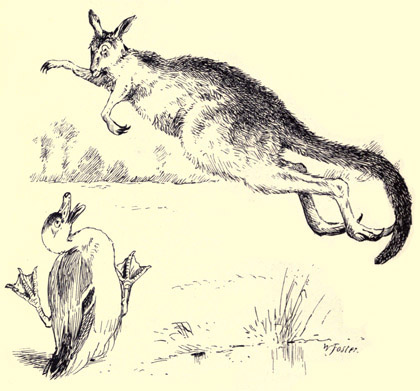illustration for The Duck and the Kangaroo 2