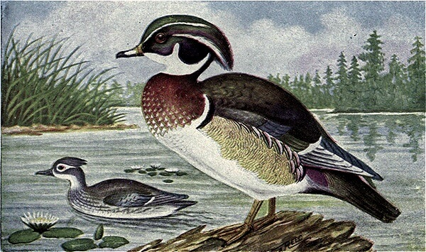 An illustration for the story To A Waterfowl by the author William Cullen Bryant