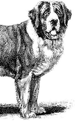 An Illustration For The Story A Dogs Tale By Author Mark Twain