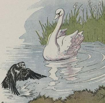 An illustration for the story A Raven And A Swan by the author Aesop