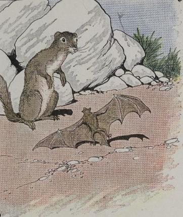 An illustration for the story The Bat And The Weasels by the author Aesop