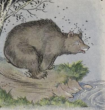An illustration for the story The Bear And The Bees by the author Aesop