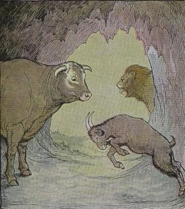 An illustration for the story The Bull And The Goat by the author Aesop