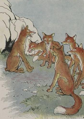 An illustration for the story The Fox Without A Tail by the author Aesop