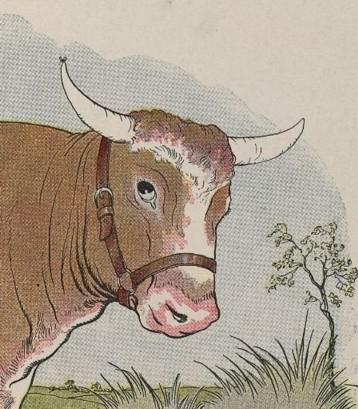 An illustration for the story The Gnat And The Bull by the author Aesop