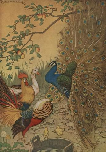 An illustration for the story The Peacock by the author Aesop