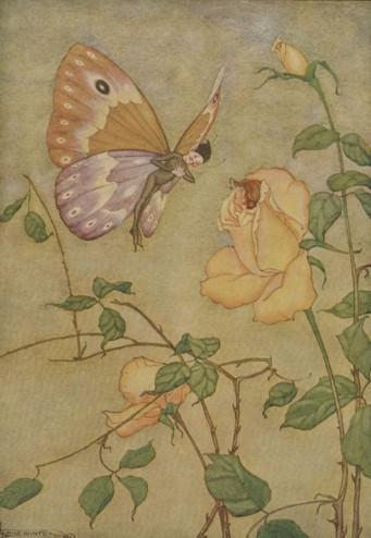 An illustration for the story The Rose And The Butterfly by the author Aesop