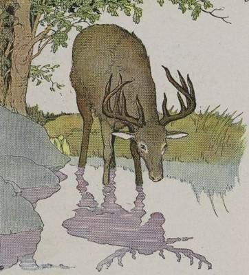 An illustration for the story The Stag And His Reflection by the author Aesop