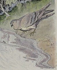 Aesop's Fables - The Ant and the Dove Fable
