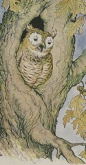 Aesop's Fables - The Owl and the Grasshopper Fable