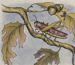 Aesop's Fables - The Grasshopper Fable