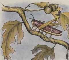 Aesop's Fables - The Grasshopper Fable