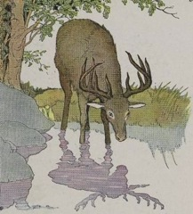 Aesop s fables the stag and his reflection fable