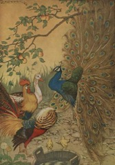Aesop's Fables - The Peacock Fable