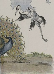 Aesop's Fables - The Peacock and the Crane Fable