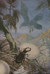 Aesop's Fables - The Eagle and the Beetle Fable