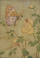 Aesop's Fables - The Rose and the Butterfly Fable
