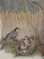 Aesop's Fables - The Lark and her Young Ones Fable