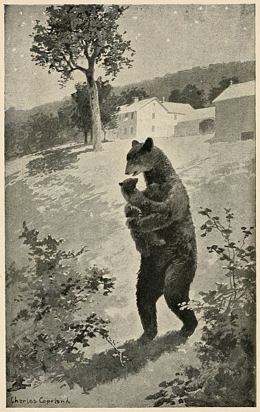 An illustration for the story Mother Bear's Call by the author Harriet Prescott Spofford