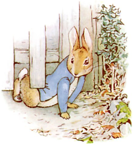 Peter Rabbit gate