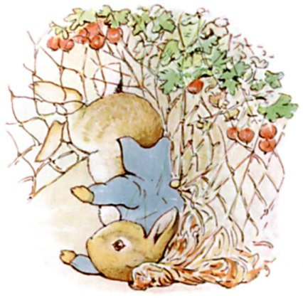 Peter Rabbit gooseberry next