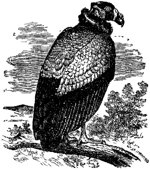 An illustration for the story Reginald's Peace Poem by the author H.H. Munro (SAKI)
