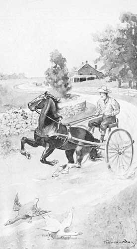 An illustration for the story The Bay Colt Learns to Mind by the author Clara Dillingham Pierson