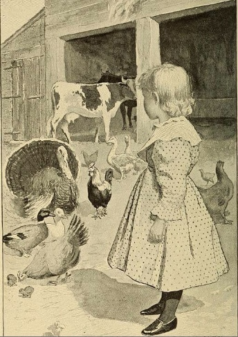 An illustration for the story The Chicken Who Wouldn't Eat Gravel by the author Clara Dillingham Pierson