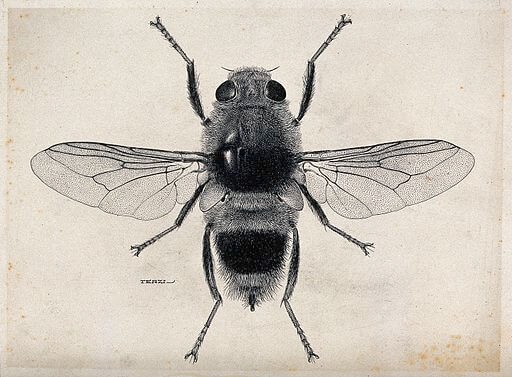 An illustration for the story The Fly by the author Katherine Mansfield