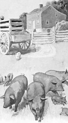An illustration for the story The Lonely Little Pig by the author Clara Dillingham Pierson