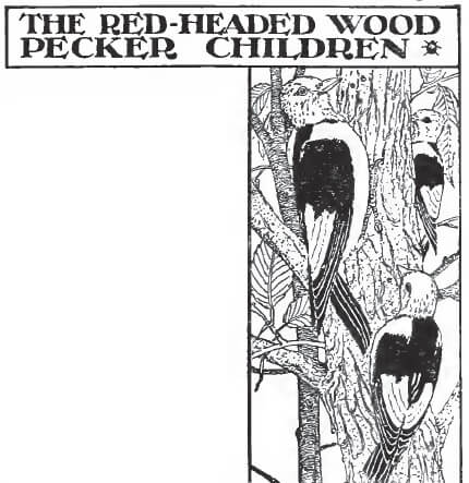 An illustration for the story The Red-Headed Woodpecker Children by the author Clara Dillingham Pierson
