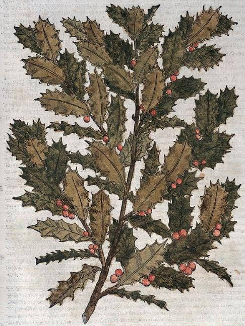 The Sprig of Holly, holly branch woodcut, 1568