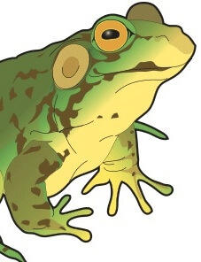 Pre-K Phonics: Five Little Speckled Frogs