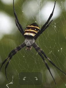 Pre-K Phonics: The Itsy Bitsy Spider