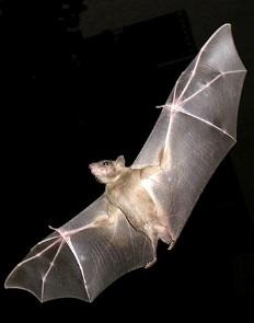 Perfect for Halloween: The Little Bat Who Whouldn't Go to Bed